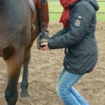 Centered Riding enkel release